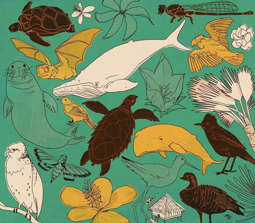 Illustration -- Hawa'ai's endangered species