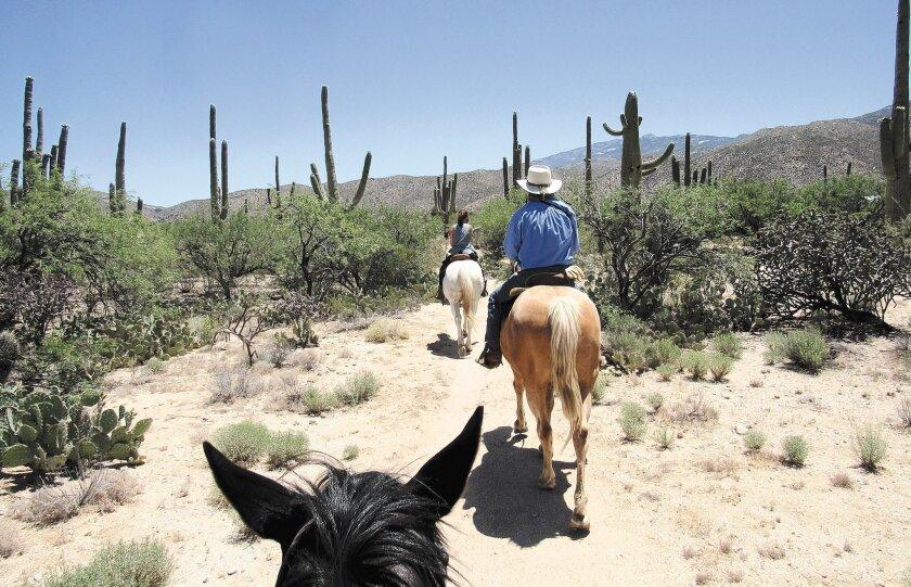 A desert trail ride winds through saguaro cactuses.
