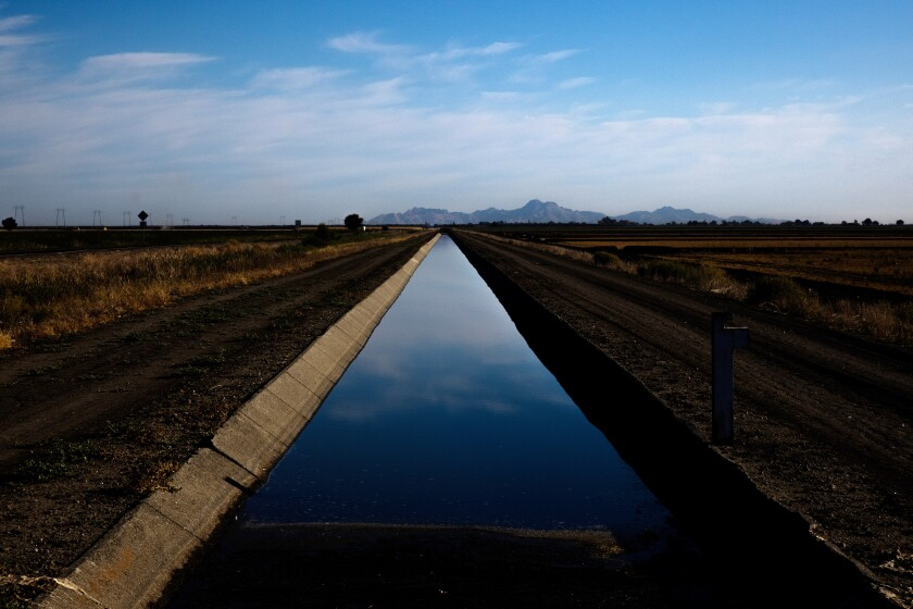 An irrigation canal that feeds rice fields in Knights Landing.