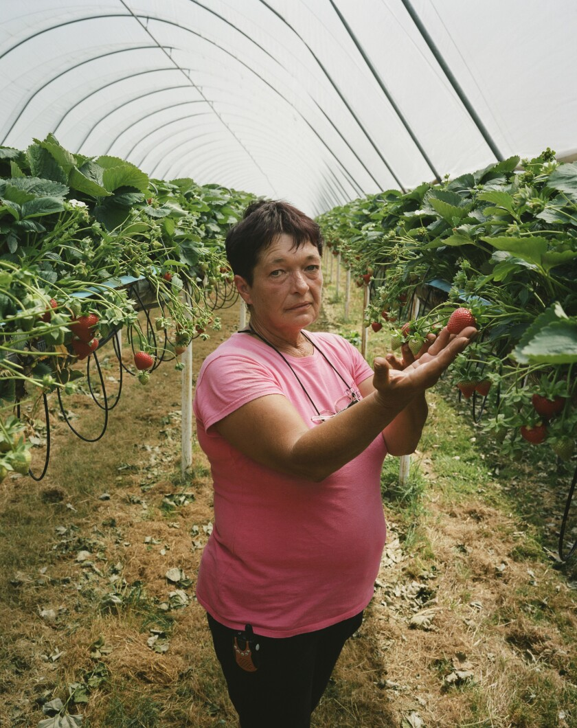 Snell farm crew leader Gabriela Yuganaru is from Romania. She has been picking fruit in Britain for 10 years.