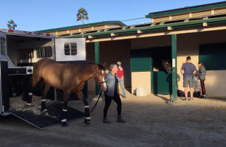 Horse evacuated at the Del Mar Fairgrounds