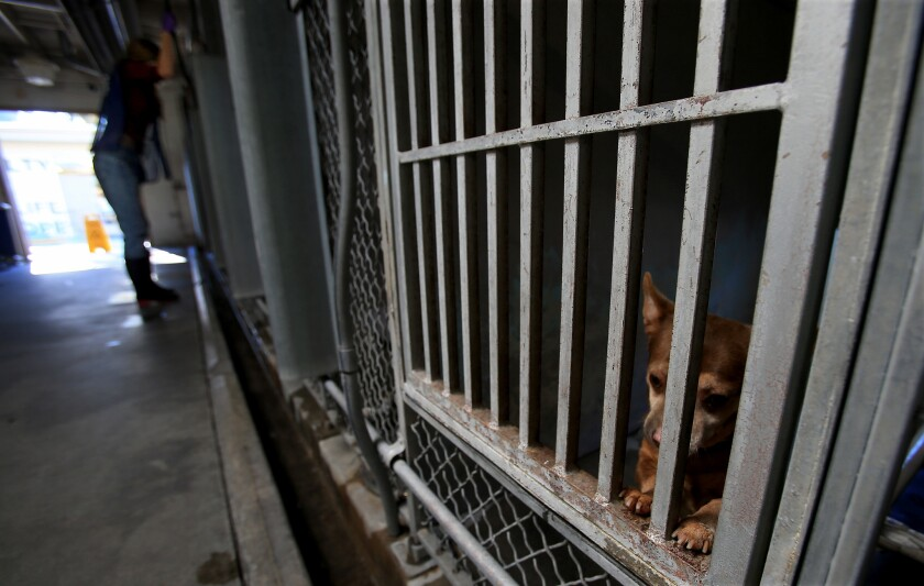 County animal shelters