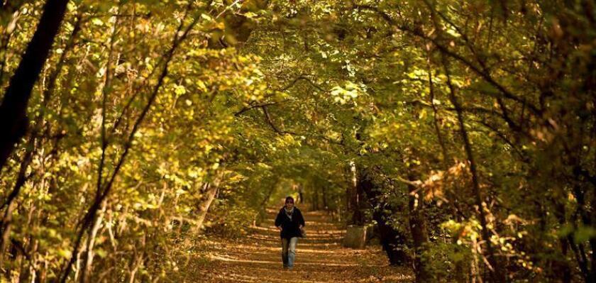Una mujer pasea por un parque una mañana de otoño. EFE/Archivo