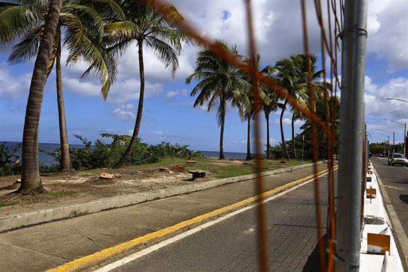 El representante José Pérez pidió hoy explicaciones por el corte de decenas de palmas en el balneario de Añasco -en el oeste de Puerto Rico- en días recientes, e informó que se investigará para conocer quién dio la orden, la causa o justificación. EFE/Archivo