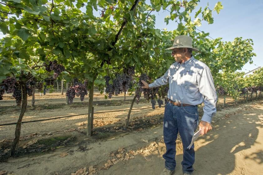 la-fo-grapes-grapes-grapes-006.JPG
