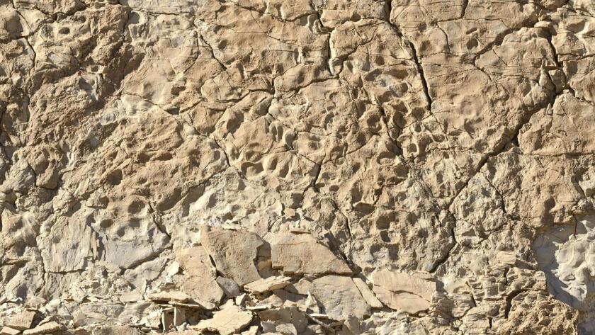 Los rastros fósiles están incrustados en las paredes del cañón en el Parque Nacional de Death Valley, que contiene una de las mayores, más diversas y mejor conservadas concentraciones de huellas de mamíferos y aves prehistóricas en el mundo.