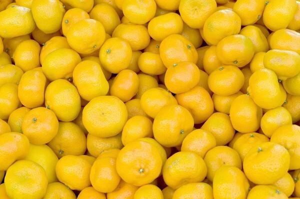 Seedless Kishu mandarins