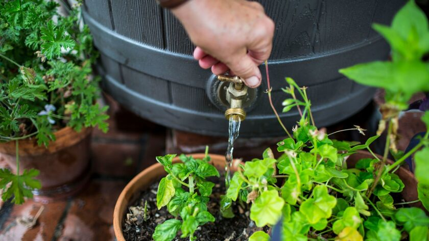 Annie Costanzo waters plants using a rain barrel in Los Angeles. Researchers say that when Californians conserved water during the drought, they also cut back on pollution.