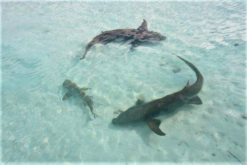 Margo Schwab with sharks.jpg