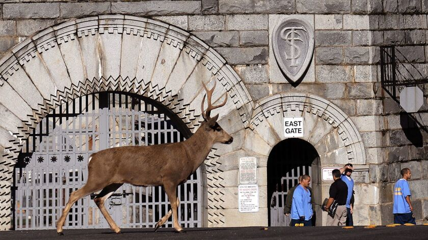 FOLSOM, CA - NOVEMBER 17, 2017 -- Inmates exit the East Gate as a buck wanders past the area where J