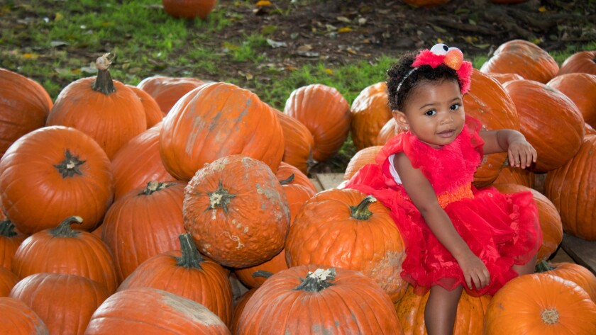 Pick your perfect pumpkin at Spooktacular, a two-day Halloween festival in Marina del Rey. (Marina d