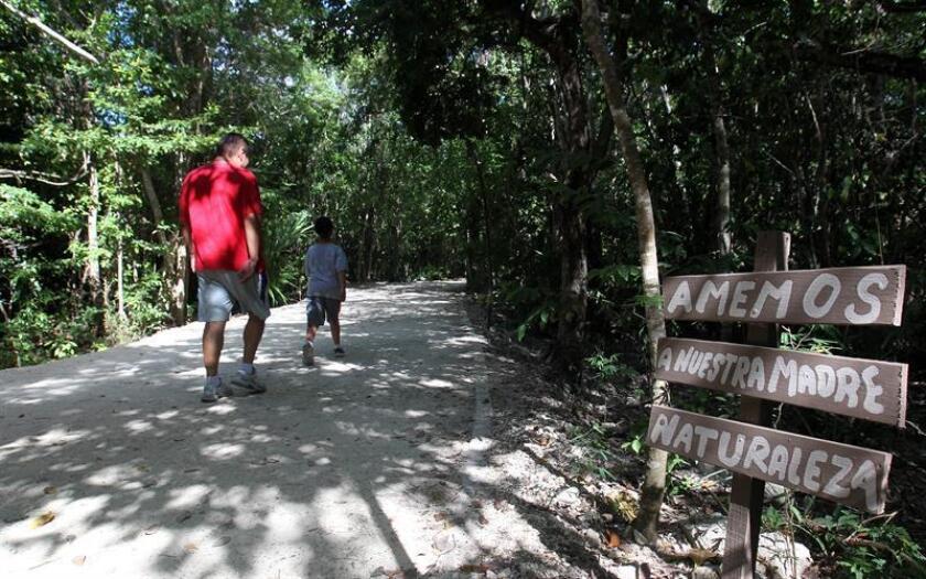 Fotografía que muestra una vista general del área protegida del parque Kabah, en el balneario de Cancún, en Quintana Roo (México). EFE/Archivo