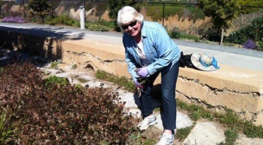Resident Donna Golich gardens on the Coastal Rail Trail on a recent Thursday, a task she has done weekly since the trail's creation. Photo: Katie Pelisek