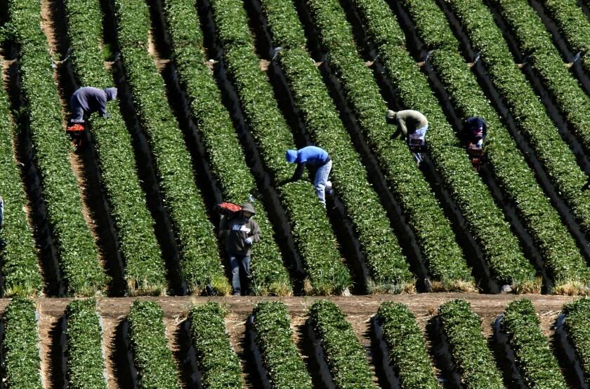 Farm laborers in Mexico