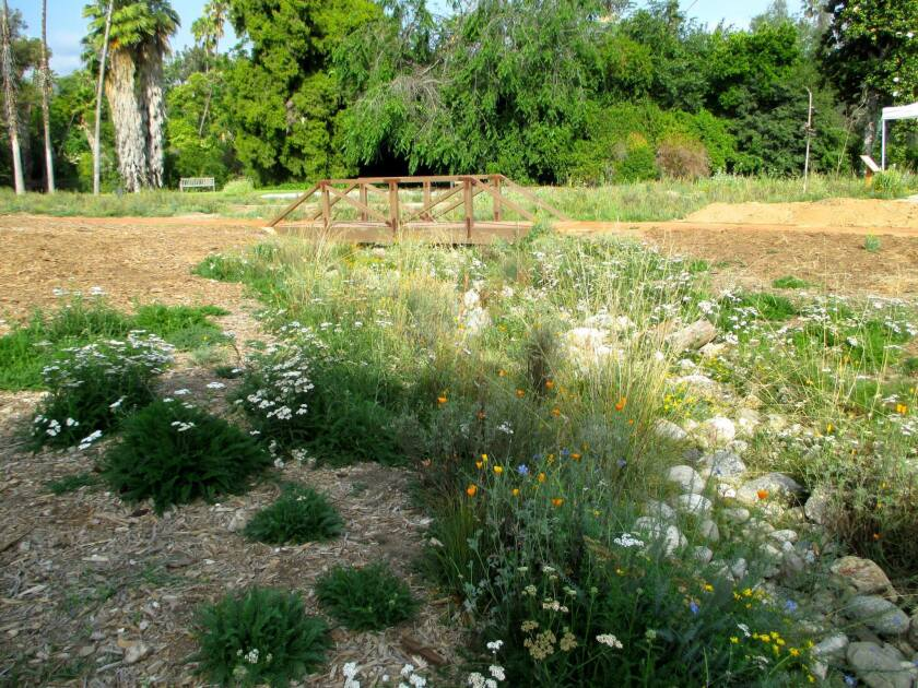 A bioswale filled with juncus, yarrow, purple stipa, poppies, deer weed and blue flax is thriving on harvested water at the Los Angeles County Arboretum and Botanic Garden's new Crescent Farm.