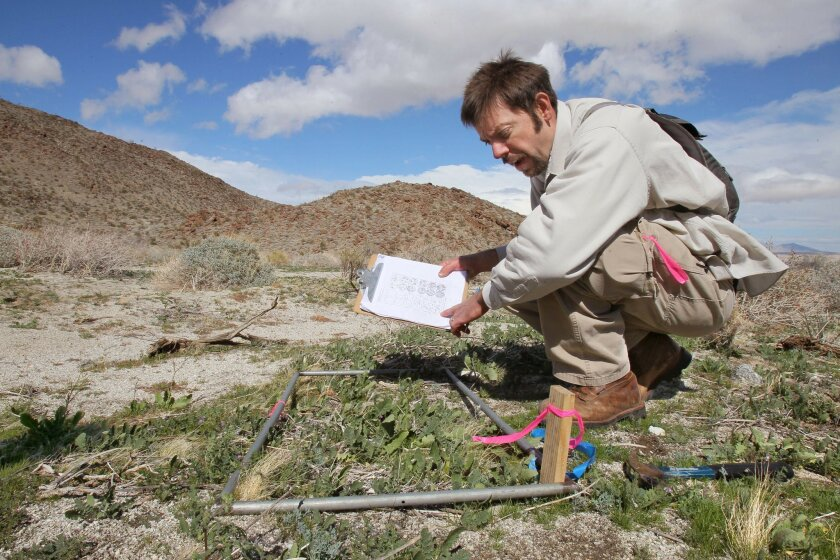 "Chris McDonald, with UC Cooperative Extension, records how many invasive Sahara mustard plant specimens are growing within the""quadrant"" of the steel frame he placed on the ground."