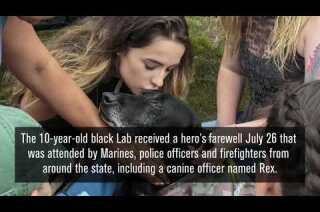 Marine dog with cancer gets tear-filled hero's farewell