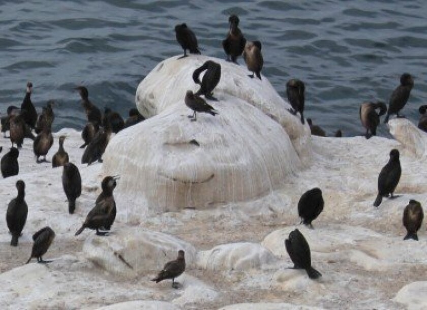 Bird droppings on rocks near La Jolla Cove are causing visitors to clench their collective noses. Pat Sherman Photos