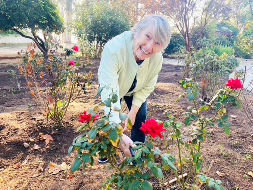 Huntington Manor resident Marjorie Ball tending some of roses in the assisted living community's garden in Poway.