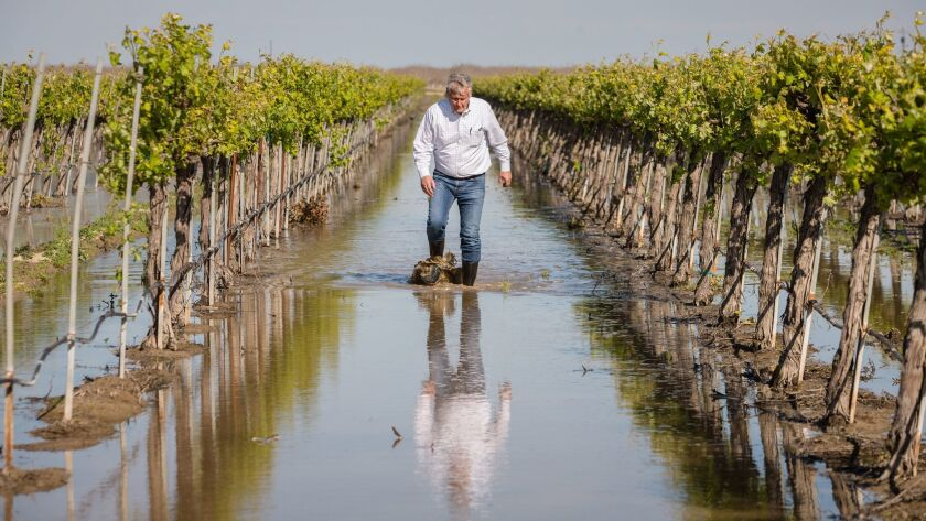 Don Cameron, general manager of Terranova Ranch, stands in a vineyard covered with Kings River flood