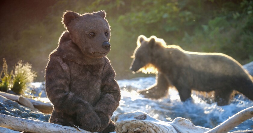 "A spy bear and a live grizzly in ""Spy in the Wild: A Nature Miniseries"" on PBS."