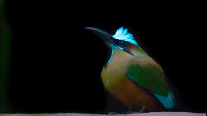 A trip to Mexico's Yucatan peninsula offers a photography tour that seeks to let visitors get a glimpse of permaculture, a concept that embraces care for the earth, care for people and fair share. Here you can see motmot birds.