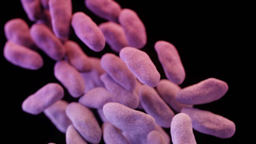 Antibiotic-resistant Bacteria Found At Los Angeles Hospital