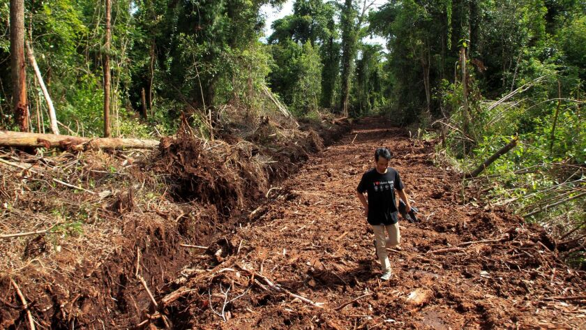 A man walks through a damaged forest area in Aceh, Indonesia, in 2016.