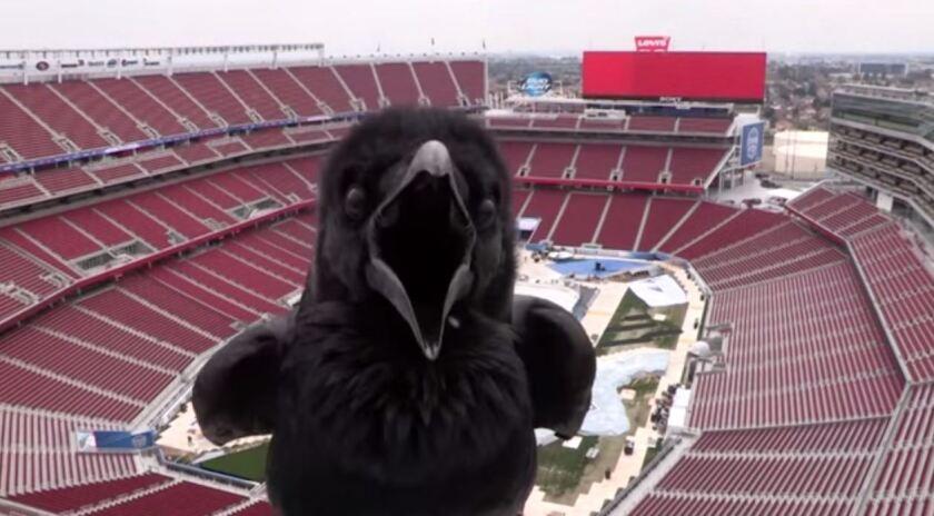 Bird selfie at San Francisco stadium