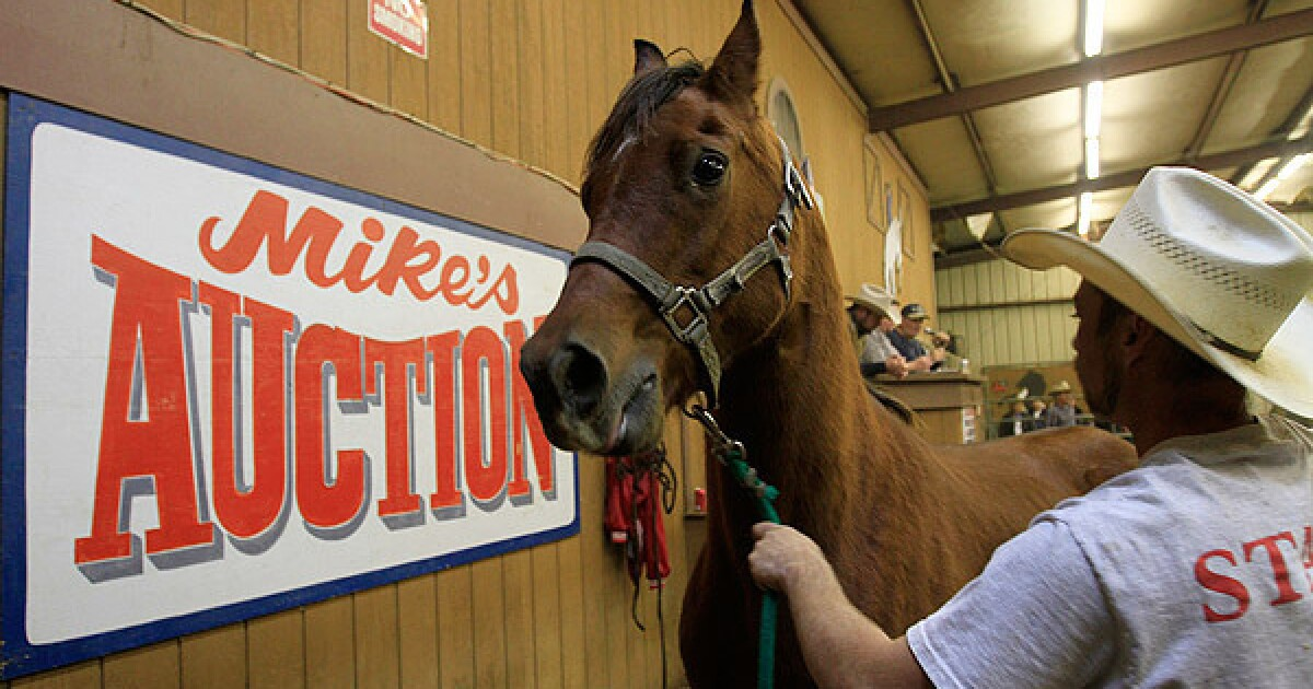 Horse auction in Mira Loma - Los Angeles Times