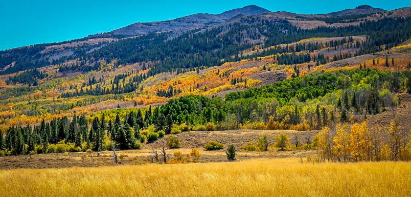 The colors along Summers Meadow Road on Monday.