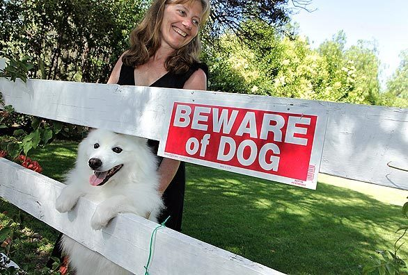 """Diane Krieger has a beloved, 6-year-old American Eskimo dog name Cotton. The problem: Cotton is a biter -- or as Krieger's husband, a lawyer, reminds her: """"a lawsuit waiting to happen."""" When solution after solution failed and options grew fewer, as an alternative to euthanizing the dog, Krieger decided on a dental procedure: A doctor would cut away 4 millimeters of Cotton's sharp canines using a laser and then use human-grade composite to give the teeth a smooth, blunt finish. Disarmed of his main weapons, Cotton would become more submissive -- theoretically. The Times followed along as Cotton underwent the procedure. Back to L.A. at Home."""