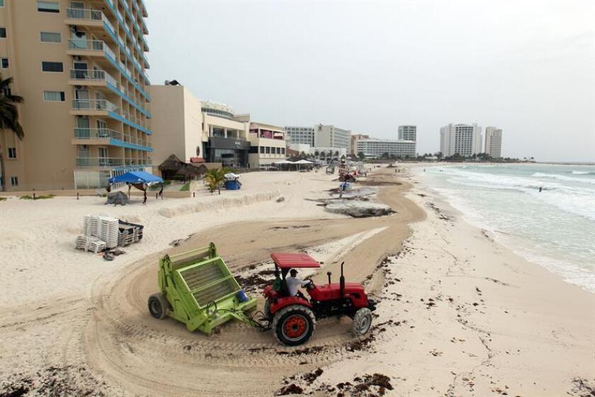 Obreros limpian de sargazo las playas ayer, jueves 9 de agosto de 2018, en el centro de recreo de Cancún, estado de Quintana Roo (México). EFE