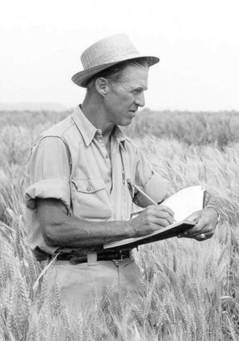 Norman Borlaug's innovations multiplied grain yields at a time when much of the world faced probable famine.