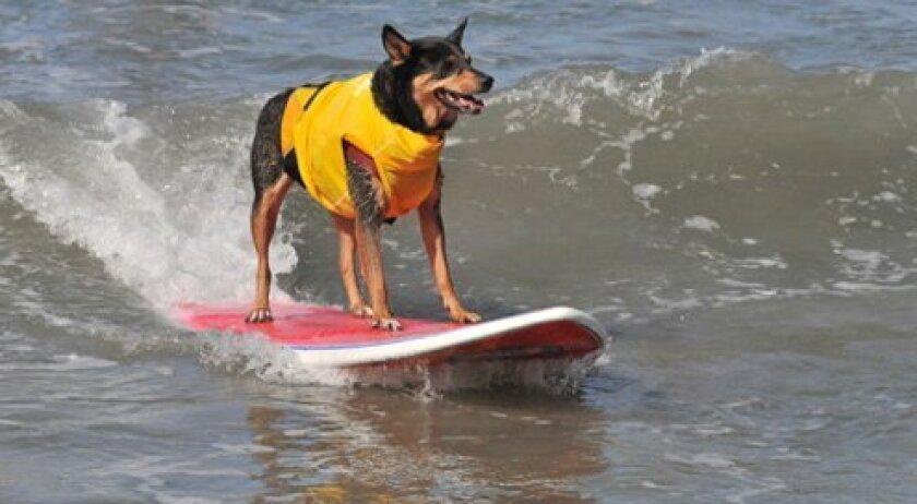Dog Surf-a-thon