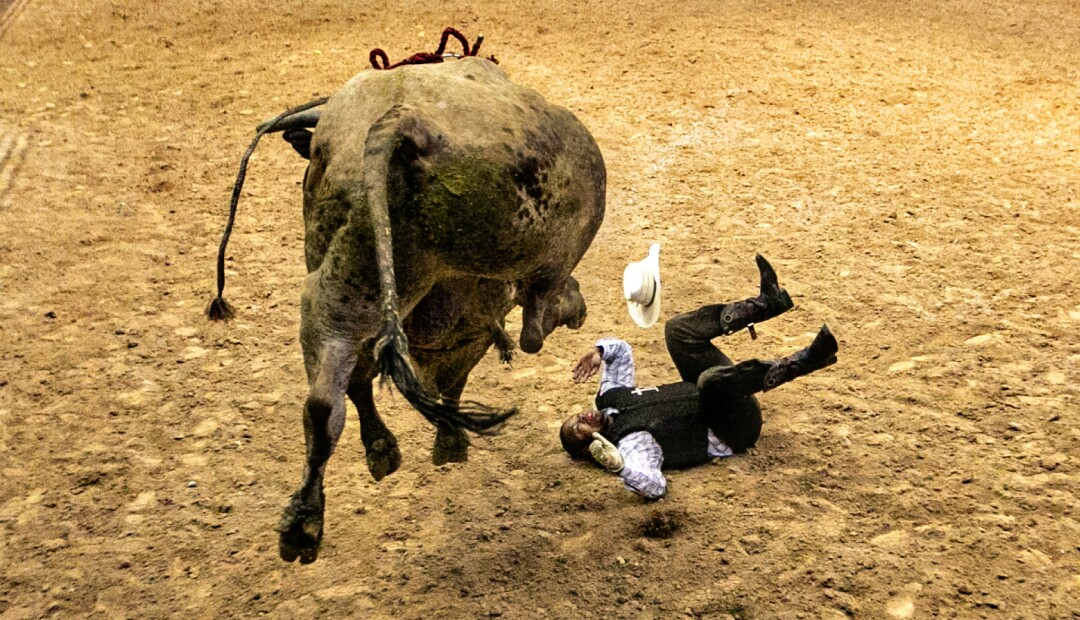 A cowboy falls to the dirt after being thrown by a bull