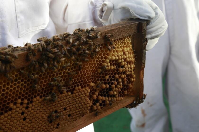 Girl Next Door Honey