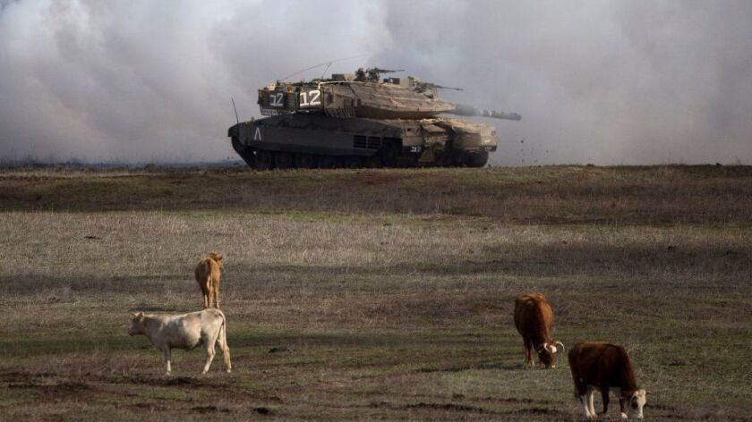 An Israeli tank drives close to livestock during military exercises in the Golan Heights on Jan. 11, 2016.