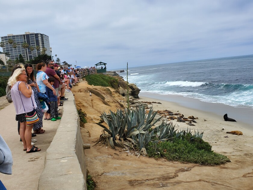 People line the sidewalk above Boomer Beach in La Jolla to view the sea lions below.