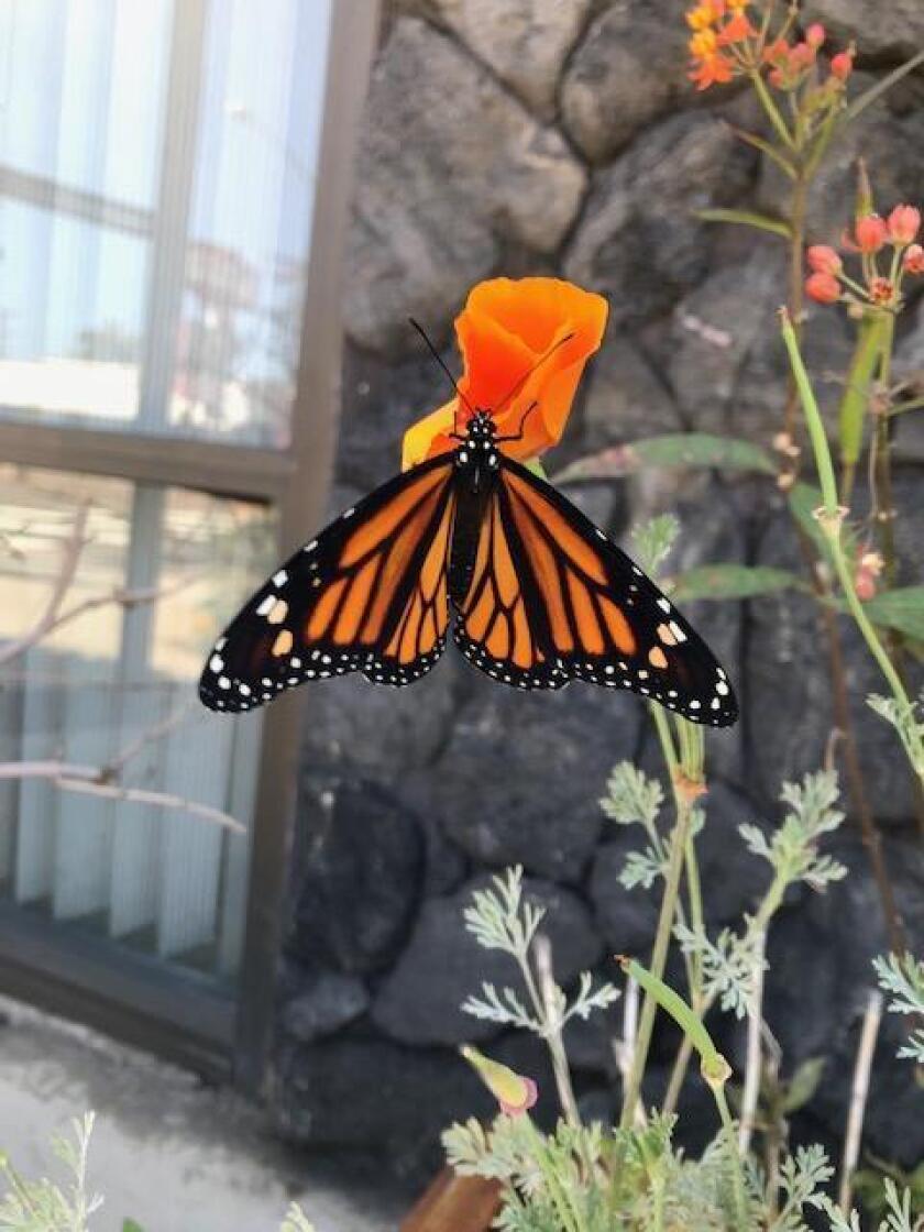 1-colorful-monarch-20190627