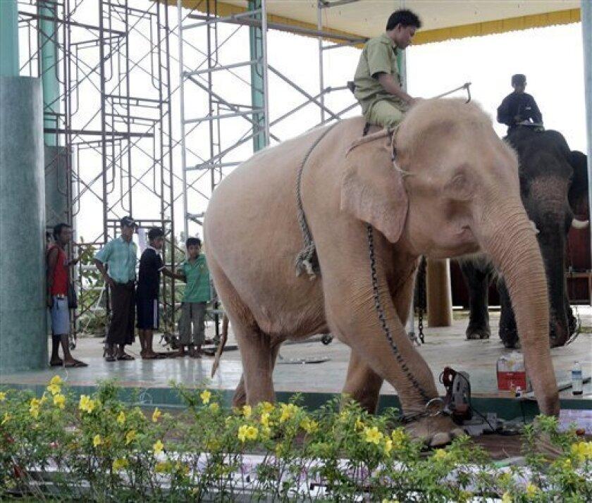 A mahout drives a white elephant to bathe it in Nay Pyi Taw, Myanmar. (AP Photo/Khin Maung Win)
