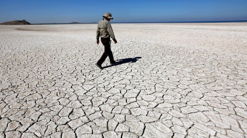 Chris Schoneman of the U.S. Fish and Wildlife Service walks along the receding shoreline of the Salton Sea, where the ecology that once supported fish and tens of thousands of migrating birds is shifting into one dominated by brine flies, gulls and shorebirds.