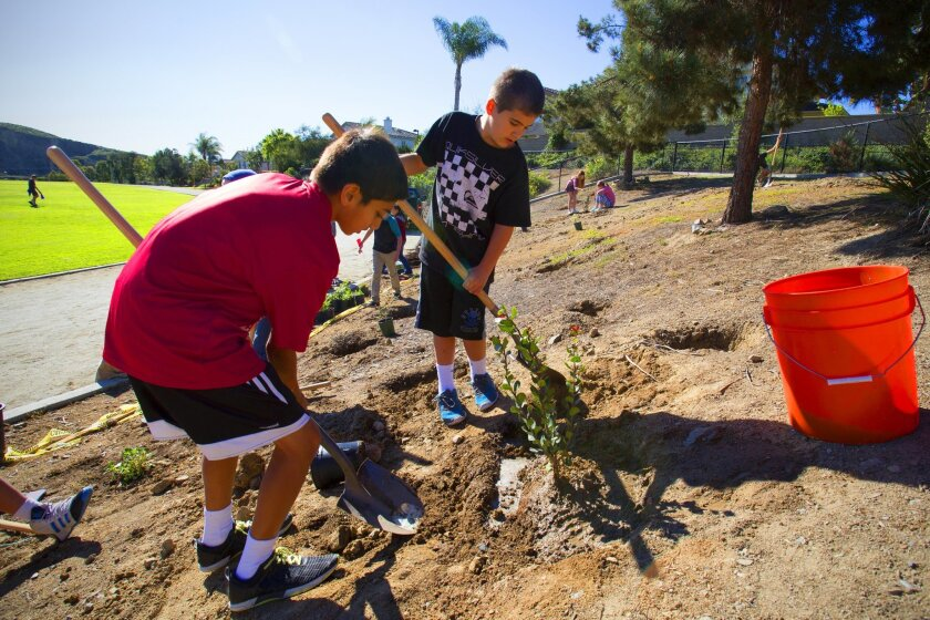 MOre than 150 students at Calavera Hills Middle School planted a native garden near the track, thanks to an $8,000 grant from the U.S. Fish and Wildlife Service.
