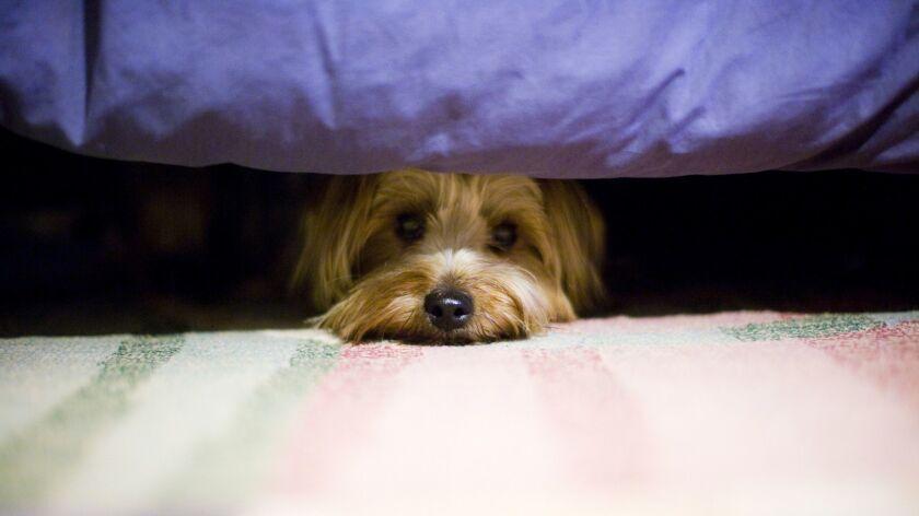 Perro escondido bajo la cama