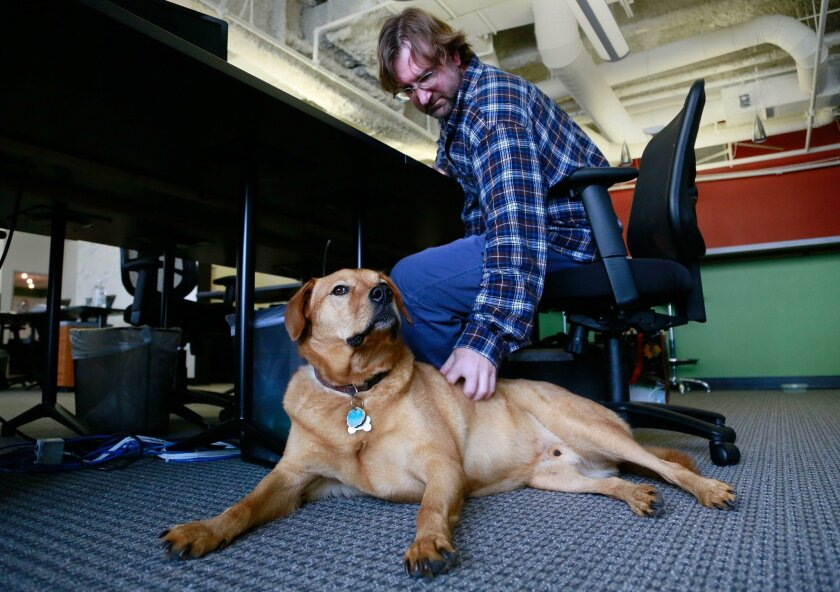 Craig Stevens shares his office with Toby at Stitch Music in the 707 Broadway Building.