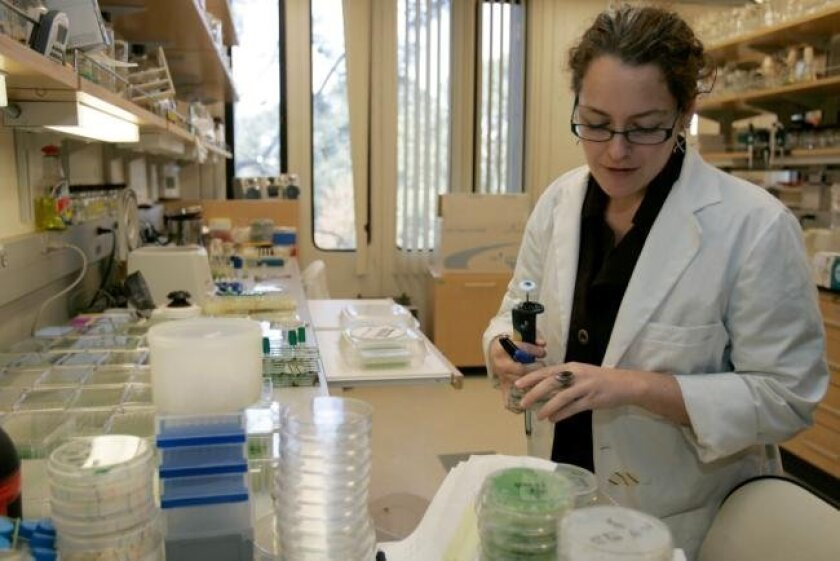 UCSD research assistant Anne Bree looked over algae samples collected in a biofuels study. College students are showing greater interest in eco-friendly fields.