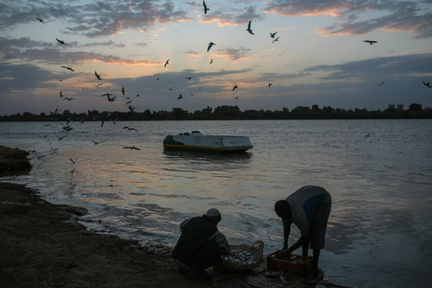 AP10ThingsToSee - Sudanese fishermen wash their day's catch by the Nile River bank at dawn, after an overnight fishing trip, in Khartoum, Sudan, Thursday, April 16, 2015. (AP Photo/Mosa'ab Elshamy)