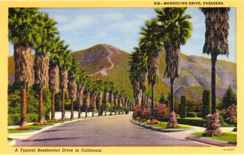 Vintage linen postcard showing view of Meddocino Drive as it winds through Pasadena with palm trees lining both sides of the street and mountains in the distance.