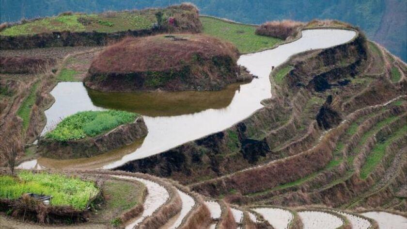 En una destartalada granja de cerdos cerca de Wuxi, en la provincia Jiangsu, China, un extranjero se baja de un taxi. La familia se sorprende: su pequeña granja queda al final de una ruta pedregosa en medio de arrozales. Rara vez llegan extranjeros en taxis pidiendo permiso para usar el baño.