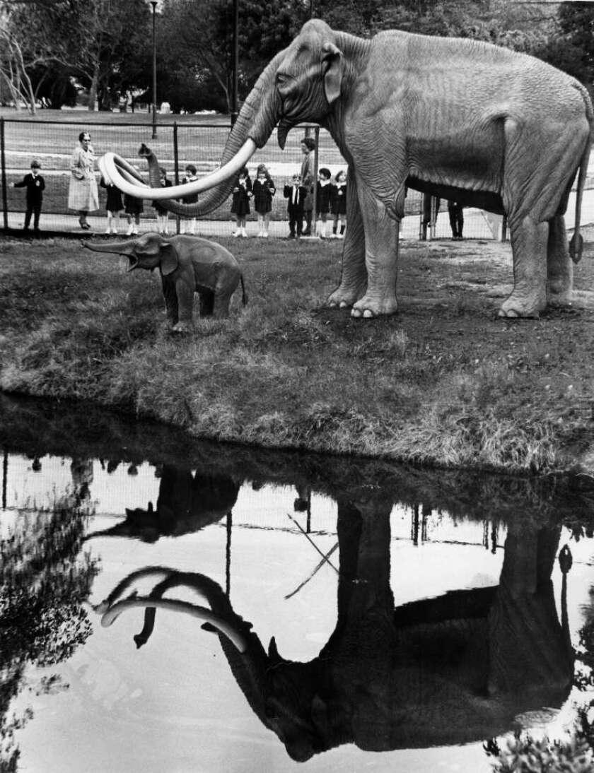 Mammoths at La Brea Tar Pits in 1969